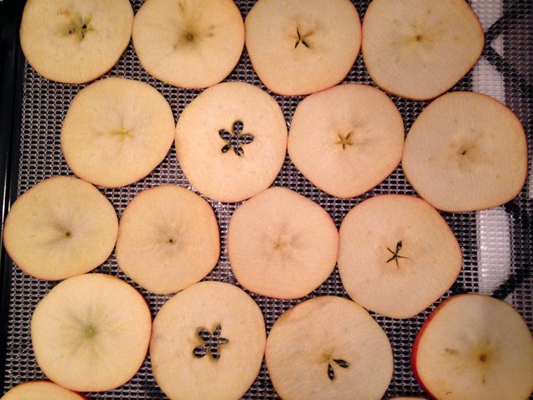 dehydrator-apples